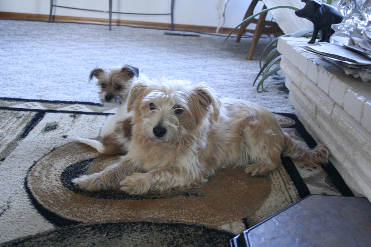 dogs_on_rug