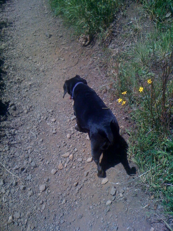 This is Bella, the black beagle, she came along for the hike and did great!