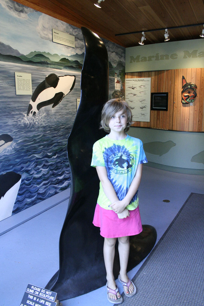 Veda standing next to a life-sized replica of Ruffles fin, which was one of the Orcas we saw on Tuesday!  He is 60 years old and his fin is taller than Mark!  It was wild to see it come out of the water!